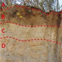La formación de los suelos