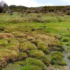 Estudio de la evolución paleoclimática a partir de las turberas