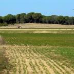 Younger Dryas: cambios climáticos que condicionaron el paisaje abulense y la vida humana
