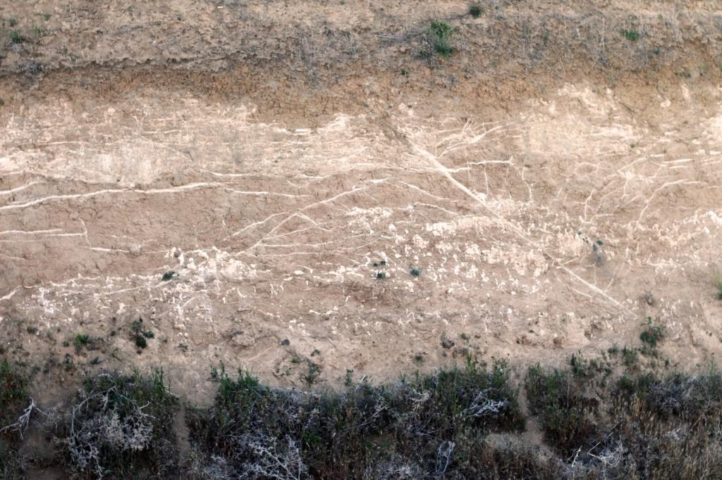 Figura 2. Calcretas laminares.
