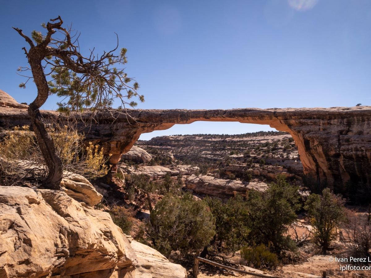 Puentes de piedra conocido como Owachomo bridge, en el Natural Bridges National Monument de Utah, Estados Unidos. © Iván Pérez López (iplfoto.com)