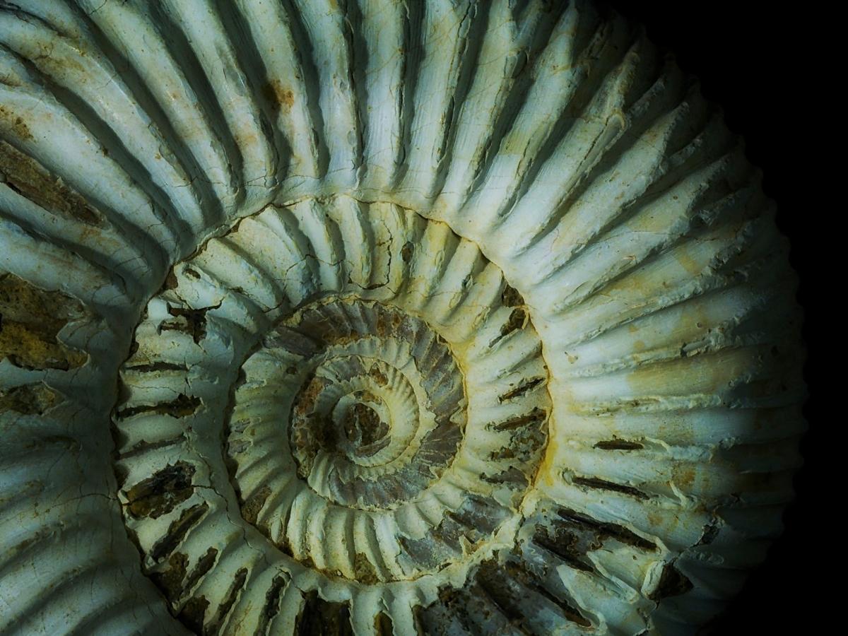 Amonites, el fósil de la divina proporción. Foto de Gabriel Castilla.